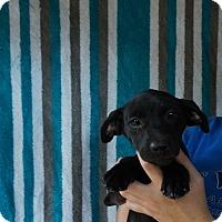 Adopt A Pet :: Aubrey - Oviedo, FL