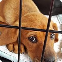 Adopt A Pet :: Mandy - GREENLAWN, NY