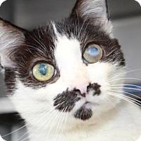 Adopt A Pet :: *WHITNEY - Camarillo, CA