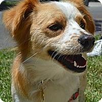 Adopt A Pet :: Pickles - Los Angeles, CA