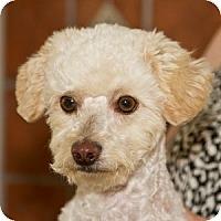 Adopt A Pet :: Zachary - La Costa, CA