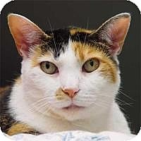 Adopt A Pet :: Gracie Ann - New York, NY