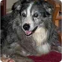 Adopt A Pet :: Seth - Madison, WI