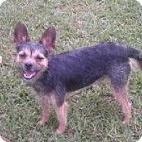 Adopt A Pet :: Jerck - Miami, FL