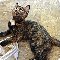 Adopt A Pet :: Lovey - Escondido, CA
