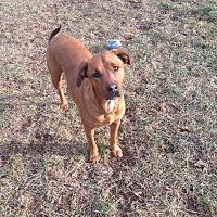 Adopt A Pet :: Rusty - Winchester, VA