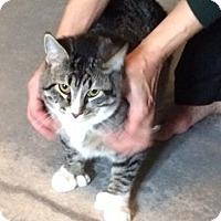 Adopt A Pet :: Catcher - Ogallala, NE