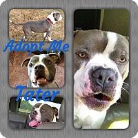 Adopt A Pet :: Tater - Cheney, KS