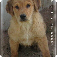 Adopt A Pet :: Brandy - Marlborough, MA