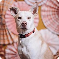 Adopt A Pet :: Trucker - Portland, OR