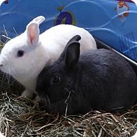 Adopt A Pet :: Psy and Tuff - Alexandria, VA