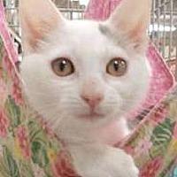 Adopt A Pet :: Stormy - Miami, FL