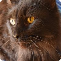 Adopt A Pet :: Zac Efron - Richand, NY
