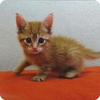 Adopt A Pet :: Sabe - San Jose, CA