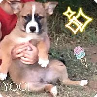 Adopt A Pet :: Yogi - DeForest, WI