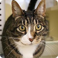 Adopt A Pet :: Art - Wenatchee, WA