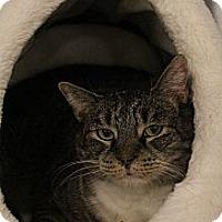 Adopt A Pet :: Sydney - Chesapeake, VA