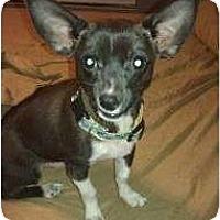 Adopt A Pet :: the DUKE - Phoenix, AZ
