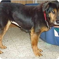 Adopt A Pet :: Midnight - Toronto/Etobicoke/GTA, ON
