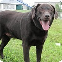 Adopt A Pet :: Lester - Lewisville, IN