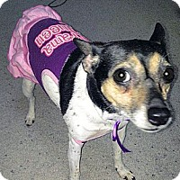 Adopt A Pet :: Cosmo-Courtesy Post - Olmsted Falls, OH