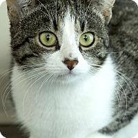 Adopt A Pet :: Rinn - Chicago, IL