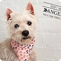 Adopt A Pet :: Angel-Pending Adoption - Omaha, NE