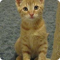 Adopt A Pet :: Berlioz - North Highlands, CA