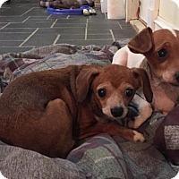 Adopt A Pet :: SHELBY and SASHA - Brunswick, ME