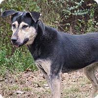 Adopt A Pet :: Clementine - Westport, CT