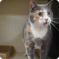 Adopt A Pet :: Monee - Hudson, NY