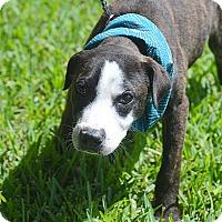 Adopt A Pet :: Page - San Leon, TX