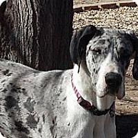 Adopt A Pet :: Tessa - Broomfield, CO