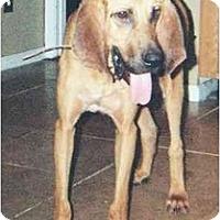 Adopt A Pet :: Tiger - Carrollton, GA