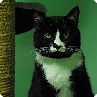 Adopt A Pet :: Hope - Lunenburg, MA