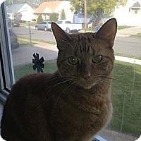 Adopt A Pet :: Rudy (L) - Little Falls, NJ