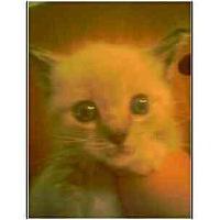 Adopt A Pet :: Tweety - Owasso, OK