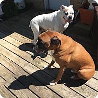 Adopt A Pet :: Cocoa and Rocky - Courtesy Pos - Rochester/Buffalo, NY