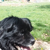 Adopt A Pet :: Tippy - Ft. Collins, CO