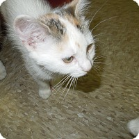 Adopt A Pet :: Katherine - Medina, OH