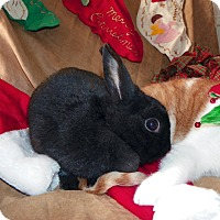 Adopt A Pet :: Anise - North Gower, ON