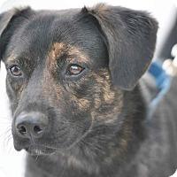 Adopt A Pet :: Mokey - Ormond Beach, FL