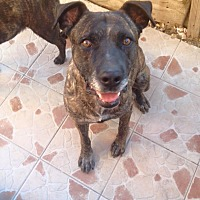 Adopt A Pet :: Pepe - San Diego, CA
