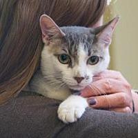 Adopt A Pet :: Torpedo - New York, NY