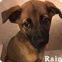 Adopt A Pet :: Rain - Homestead, FL