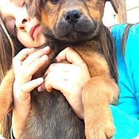 Adopt A Pet :: O Litter - Chichester, NH