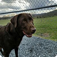 Adopt A Pet :: Regina - Buckeystown, MD