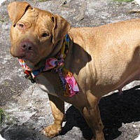 Adopt A Pet :: Tansy - Voorhees, NJ