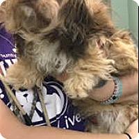 Adopt A Pet :: Jett-ADOPTION PENDING - Boulder, CO