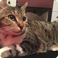 Adopt A Pet :: Ruby - Yukon, OK